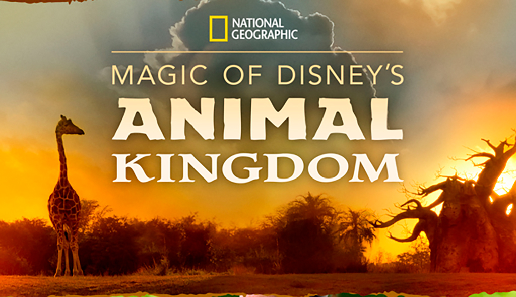 Magic of Disney Animal Kingdom